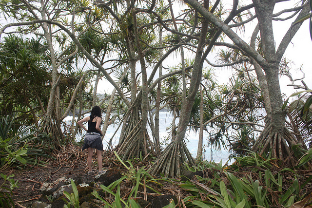Kahanu Garden Maui